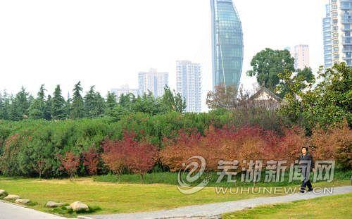 滨江公园景色如画
