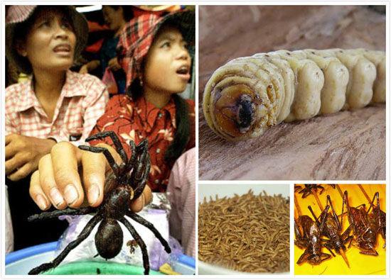 盘点全球十大美味的昆虫小吃