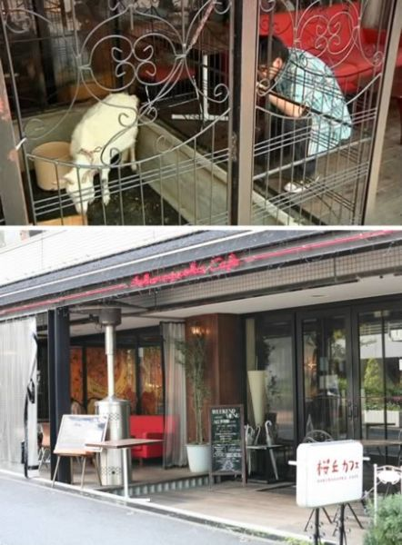 山羊咖啡馆