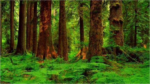 千年原始森林