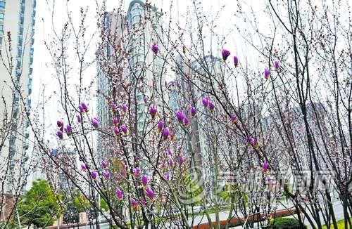 芜湖城市大建设七大亮点