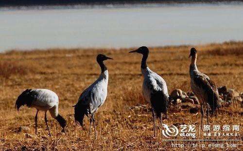 观鸟行动Action! 图片来源:中华网