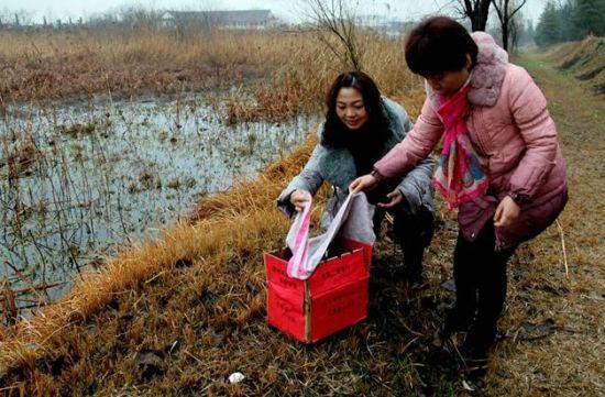 中通小伙收容野生珍禽 工行志愿美女西湖湿地放生