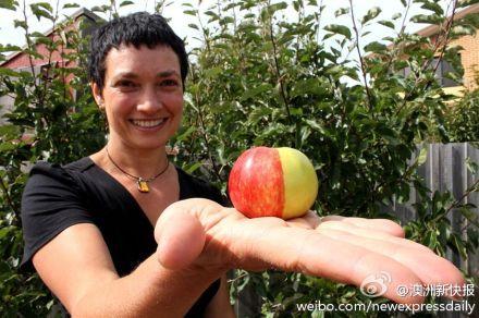变异苹果啥味啊。