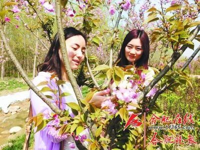 """滨湖湿地公园将举办""""首届森林樱花节"""""""