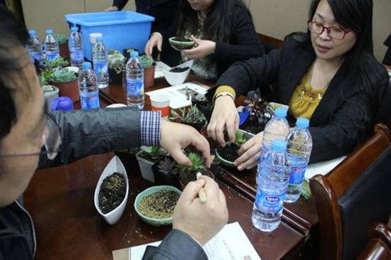 会员动手栽植多肉植物