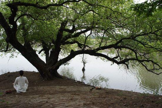 那棵颇有年头的槐柳,在一条隐秘的上山路口,黄山迎客松般右手相邀。嘴角不禁漾出一丝笑意。 往里,一组树。两棵同根同桩,树干独立。不知道该算作三棵还是四棵,开玩笑叫它们不三不四树。 干枯树叶。一层,一层。厚厚的。簌簌有声,不忍心落脚。 间距合适的两棵树,捆绑吊床。树干合抱粗。绳子差点捆不过来。 躺上去,《一切破碎,一切成灰》,置于胸前。不急于阅读。右手枕在脑后,就那么望着一大片、一大片的新绿,和新绿之上的蓝天。 吊床微微摇摆,春风拂面。 一条几乎无人问津的山路。几棵大树之外就是宽阔的马路,汽车一辆又一辆