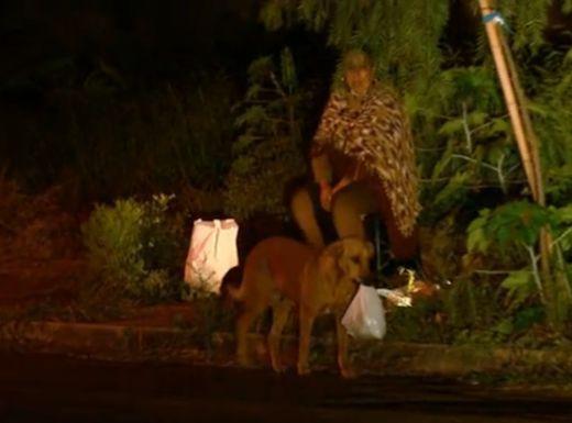 巴西小狗每晚走4公里为其动物朋友觅食