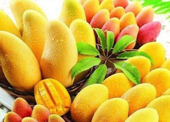 印度德里:芒果狂热