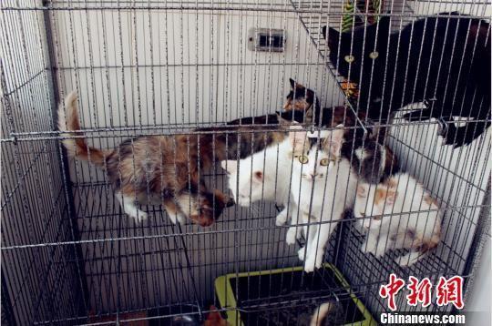 图为爱心女孩连森收养的部分流浪猫。 孙吉 摄