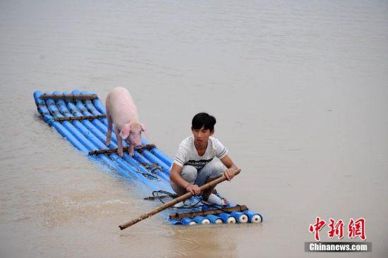 2014年8月20日,浙江丽水遭遇暴雨突袭。丽水城区、部分乡镇及道路受淹,青田县腊口、碧湖平原吴村圩多处群众受洪水围困。