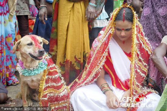 印度18岁女子被迫与流浪狗结婚