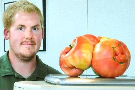 美男子培育出4斤重番茄