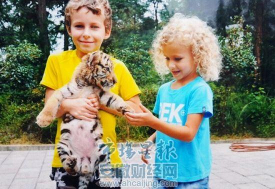 黄山虎林园小老虎吸引众多游客