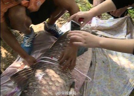垂钓爱好者钓起长165厘米重百余斤大鱼