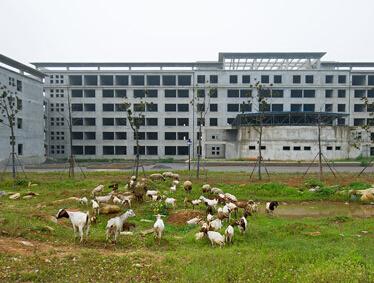 办公楼变放羊场