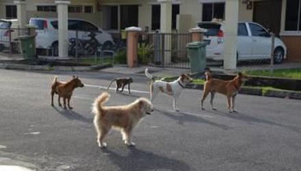 马来西亚一猴子和狗成好朋友