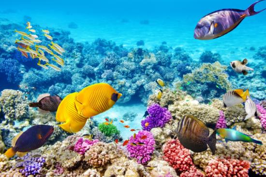 您可免费乘玻璃底船观赏海底五光十色的珊瑚礁,或者漫步于沙滩及自由