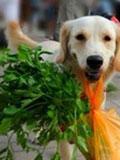 合肥小狗会做算术会买菜