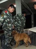 15条搜救犬来皖服役