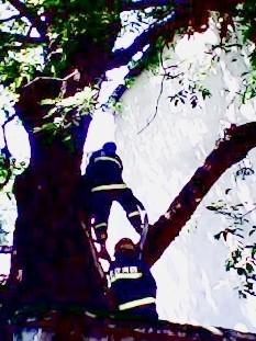 武汉200岁柳树自燃全球离奇灾祸盘点