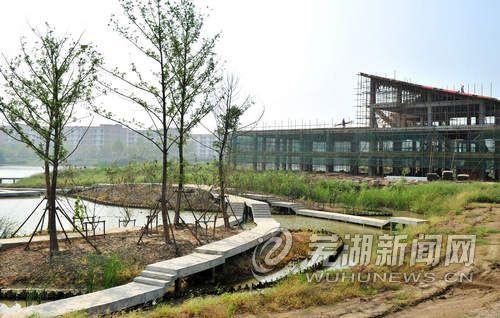 芦花荡湿地公园建设加速