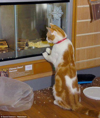 猫每天逛宠物店专看特价鱼和老鼠(图)