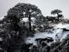 黄山迎冬雪