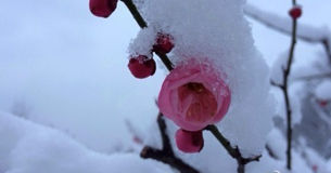 安徽各地雪景