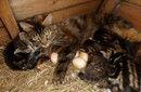 """猫妈妈带小猫""""孵蛋"""""""